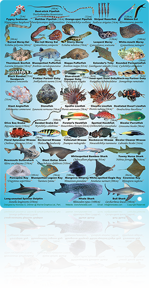 south african saltwater fish species pdf
